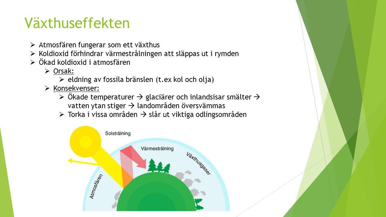 Växthuseffekten Atmosfären fungerar som ett växthus