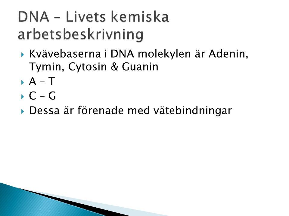 DNA – Livets kemiska arbetsbeskrivning