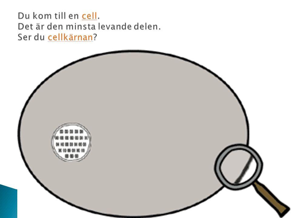 Du kom till en cell. Det är den minsta levande delen. Ser du cellkärnan