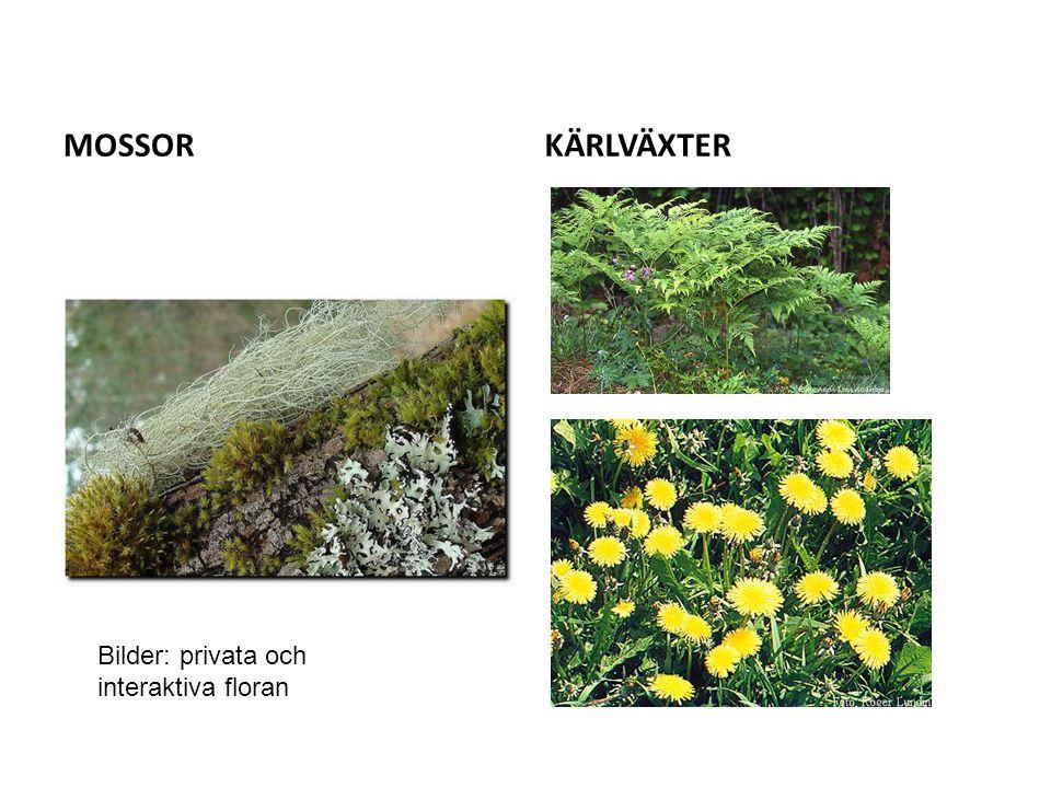 MOSSOR KÄRLVÄXTER Bilder: privata och interaktiva floran
