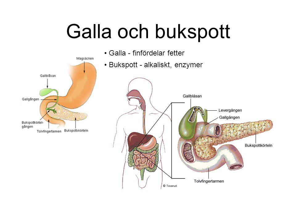 Galla och bukspott Galla - finfördelar fetter