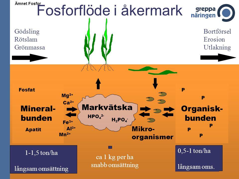 Fosforflöde i åkermark