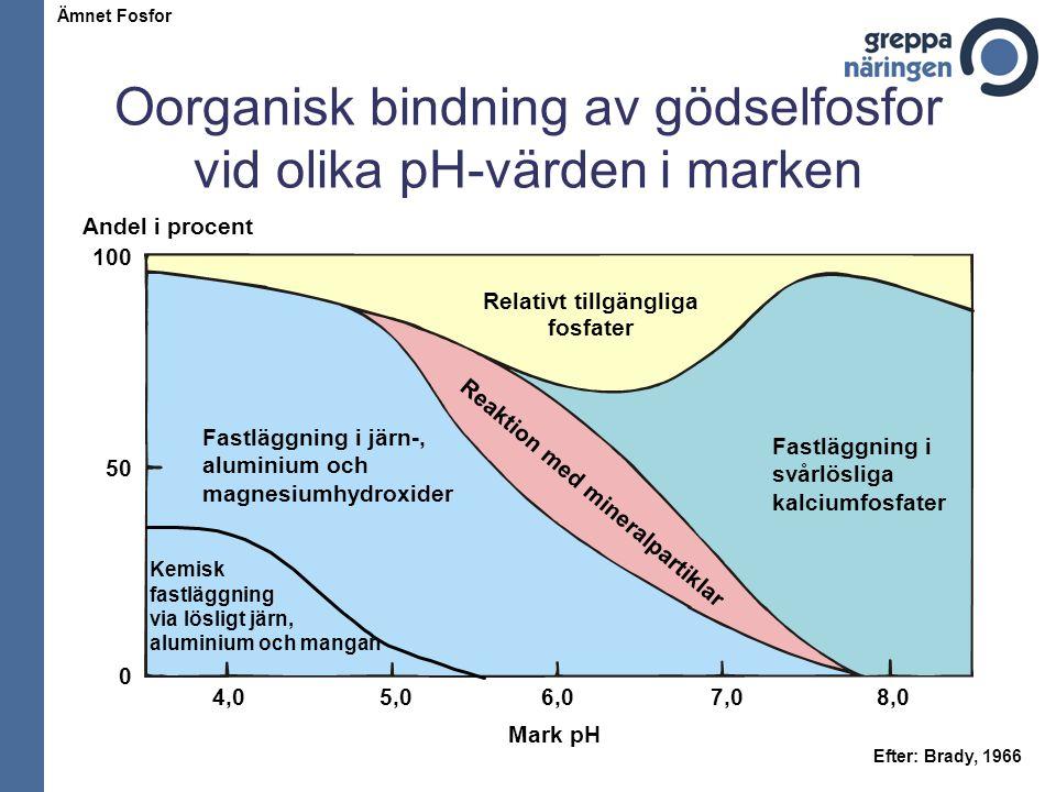 Oorganisk bindning av gödselfosfor vid olika pH-värden i marken