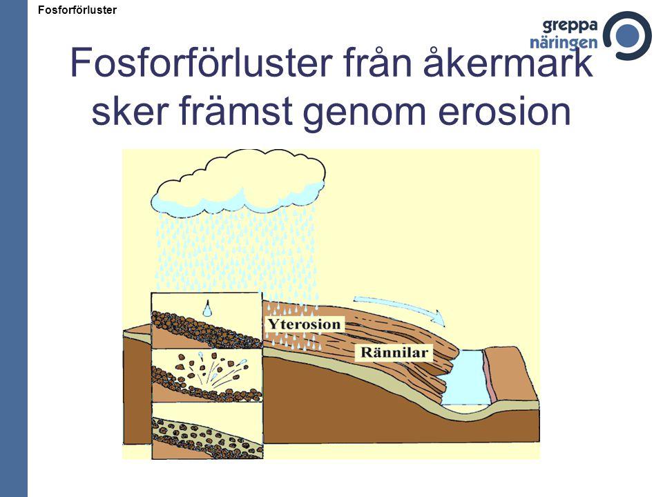 Fosforförluster från åkermark sker främst genom erosion