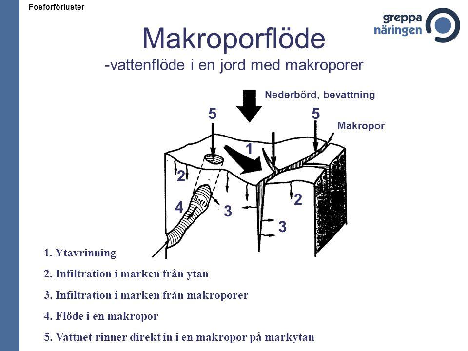 Makroporflöde -vattenflöde i en jord med makroporer