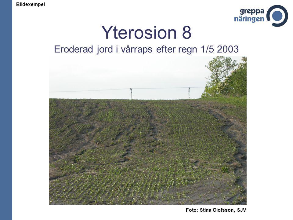 Yterosion 8 Eroderad jord i vårraps efter regn 1/5 2003