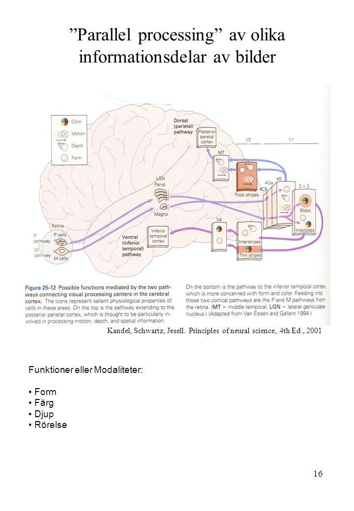 Parallel processing av olika informationsdelar av bilder