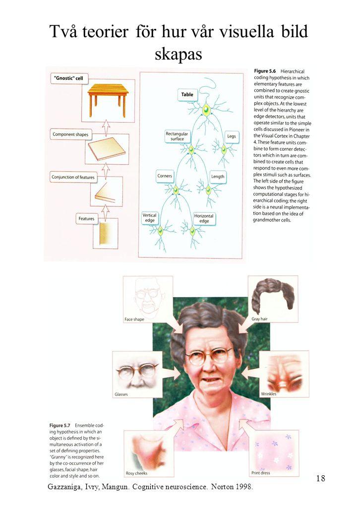 Två teorier för hur vår visuella bild skapas