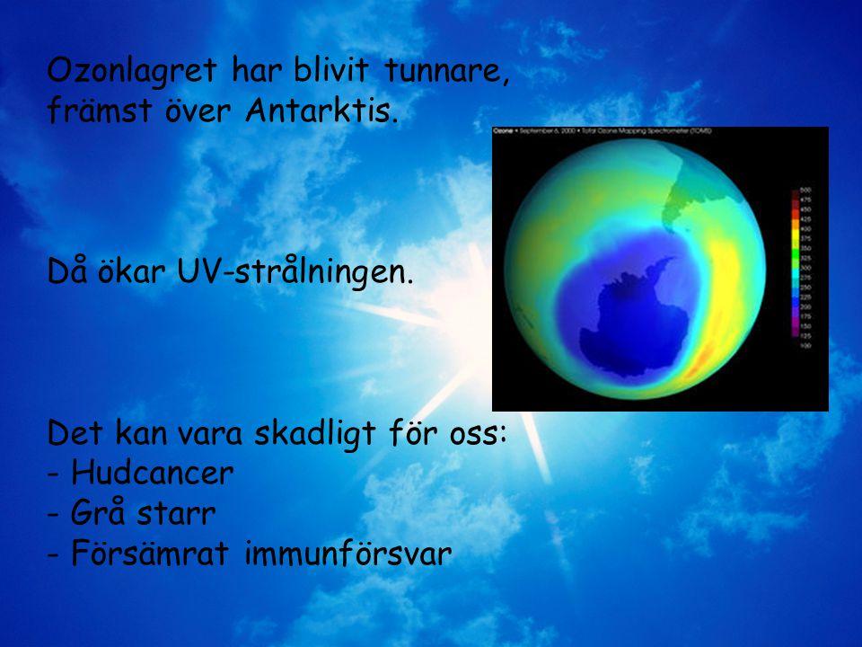 Ozonlagret har blivit tunnare, främst över Antarktis.