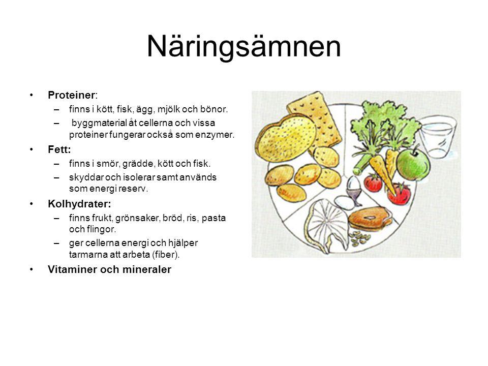 Näringsämnen Proteiner: Fett: Kolhydrater: Vitaminer och mineraler