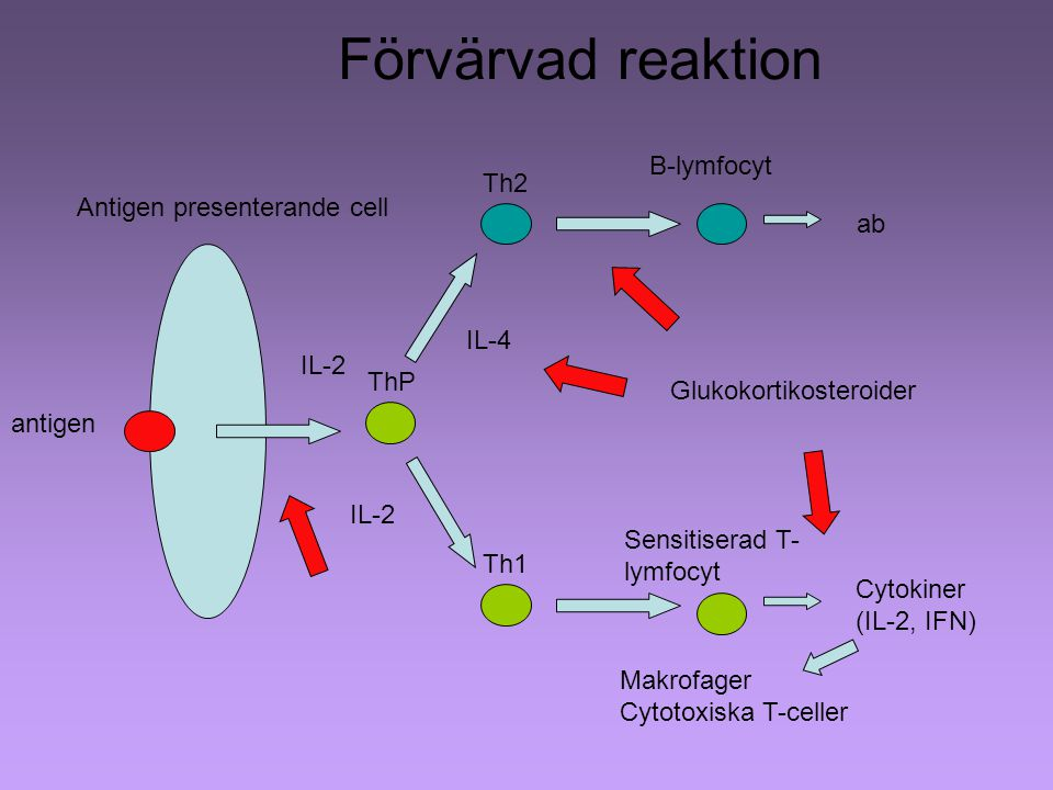 Förvärvad reaktion B-lymfocyt Th2 Antigen presenterande cell ab IL-4