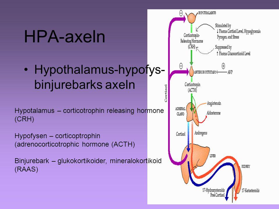 HPA-axeln Hypothalamus-hypofys-binjurebarks axeln