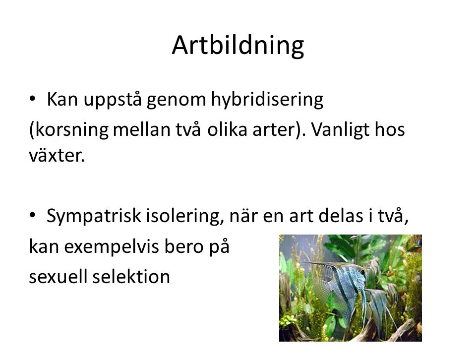 Artbildning Kan uppstå genom hybridisering