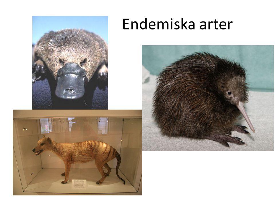 Endemiska arter