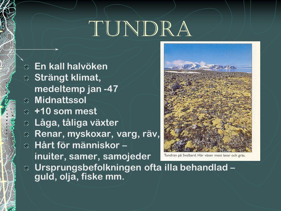Tundra En kall halvöken Strängt klimat, medeltemp jan -47 Midnattssol
