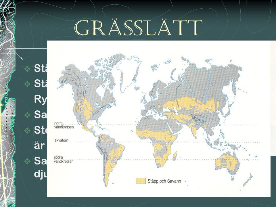 Grässlätt Stäpp och savann Stäpp i Amerika, Australien,