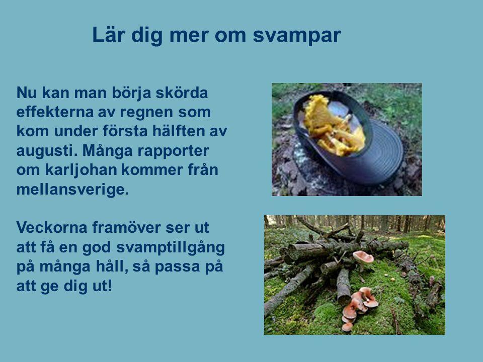 Lär dig mer om svampar