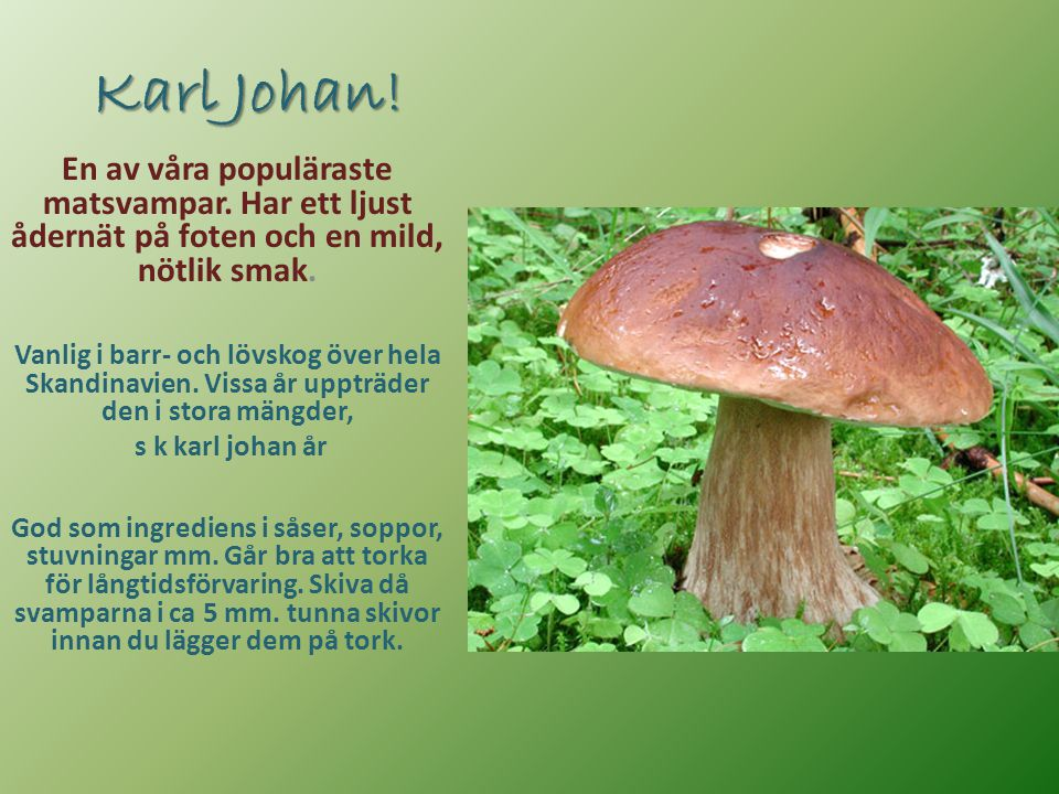 Karl Johan! En av våra populäraste matsvampar. Har ett ljust ådernät på foten och en mild, nötlik smak.