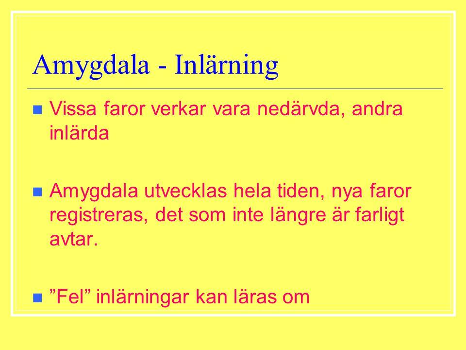 Amygdala - Inlärning Vissa faror verkar vara nedärvda, andra inlärda