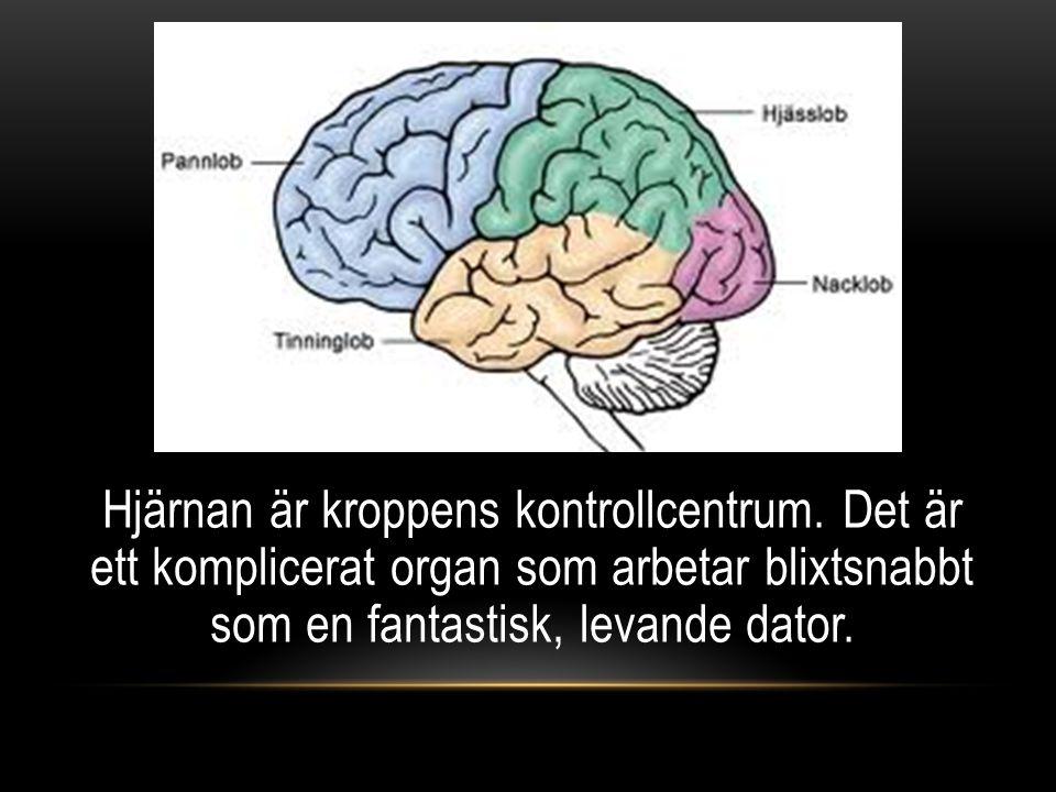 Hjärnan är kroppens kontrollcentrum