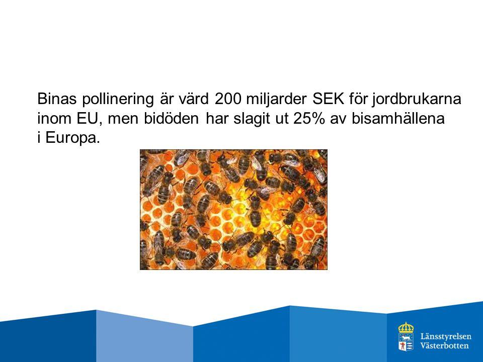 Binas pollinering är värd 200 miljarder SEK för jordbrukarna