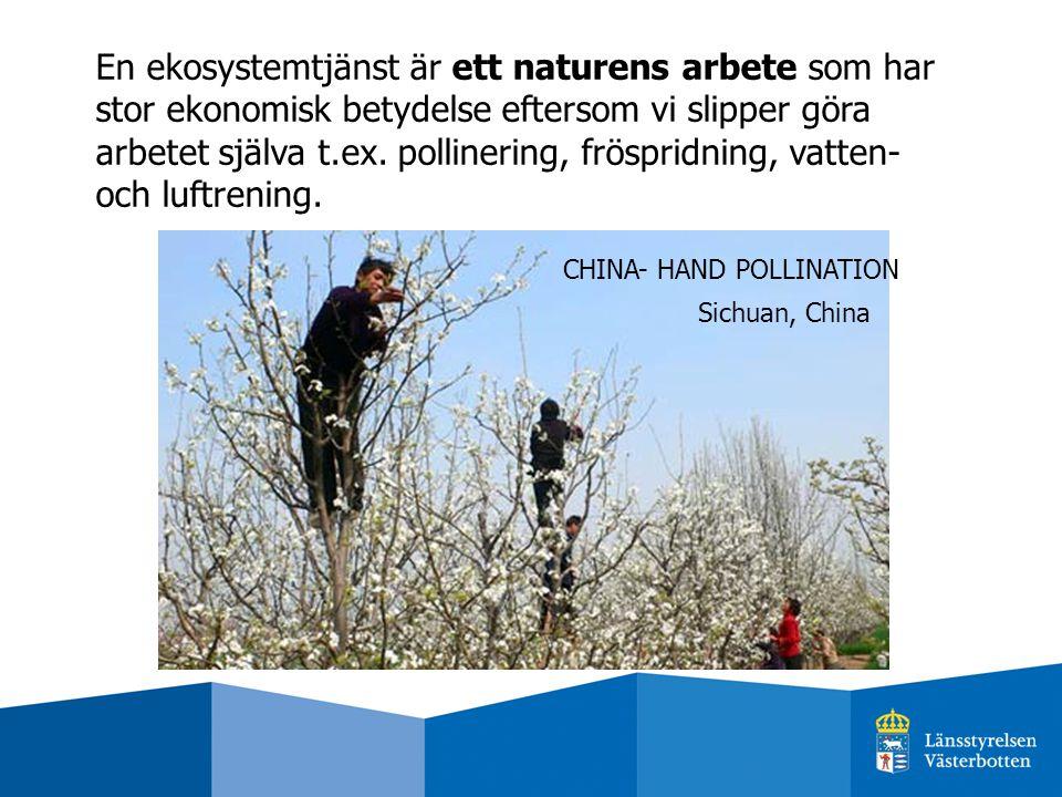 En ekosystemtjänst är ett naturens arbete som har stor ekonomisk betydelse eftersom vi slipper göra arbetet själva t.ex. pollinering, fröspridning, vatten- och luftrening.