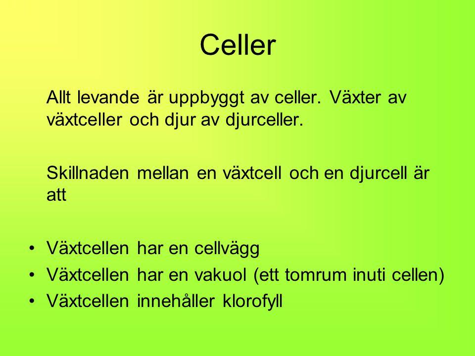 Celler Allt levande är uppbyggt av celler. Växter av växtceller och djur av djurceller. Skillnaden mellan en växtcell och en djurcell är att.