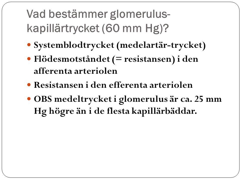 Vad bestämmer glomerulus-kapillärtrycket (60 mm Hg)