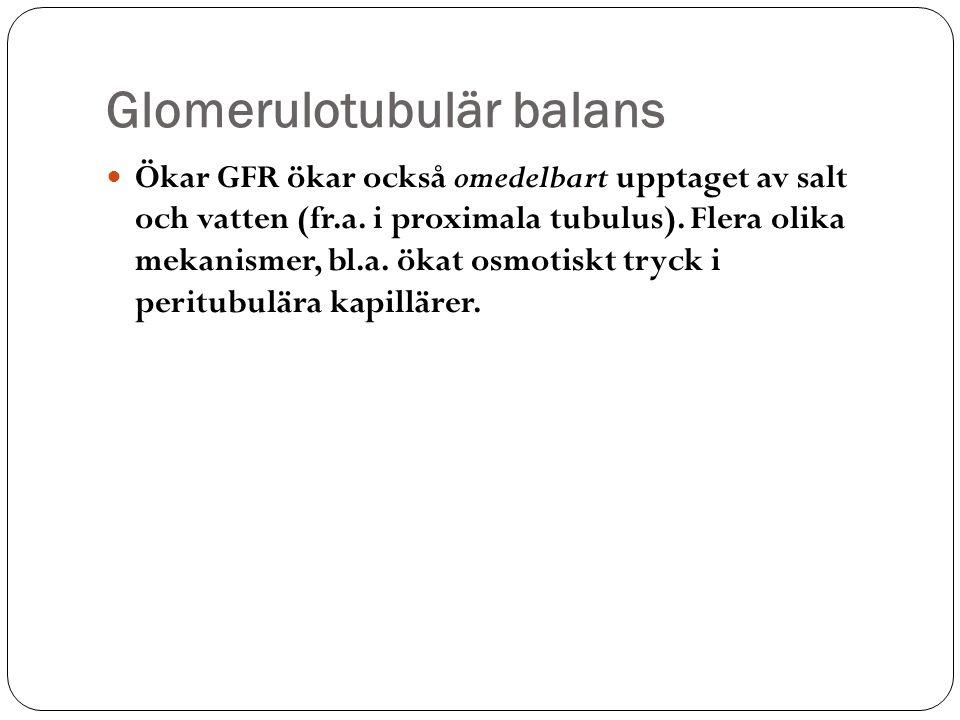 Glomerulotubulär balans