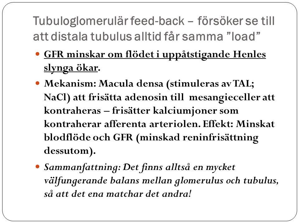 Tubuloglomerulär feed-back – försöker se till att distala tubulus alltid får samma load