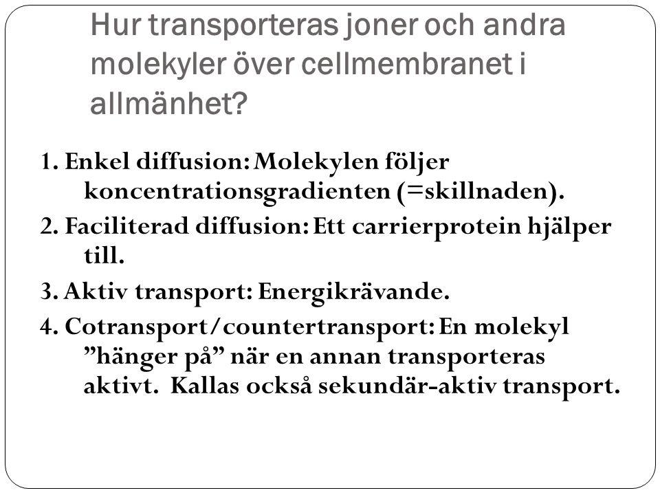 Hur transporteras joner och andra molekyler över cellmembranet i allmänhet