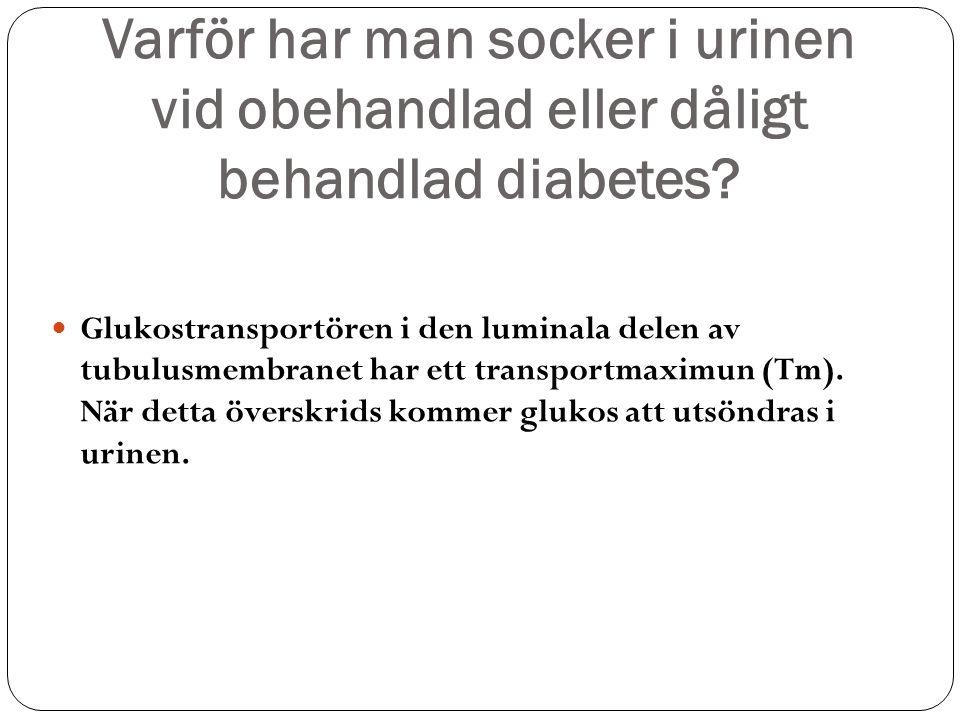 Varför har man socker i urinen vid obehandlad eller dåligt behandlad diabetes