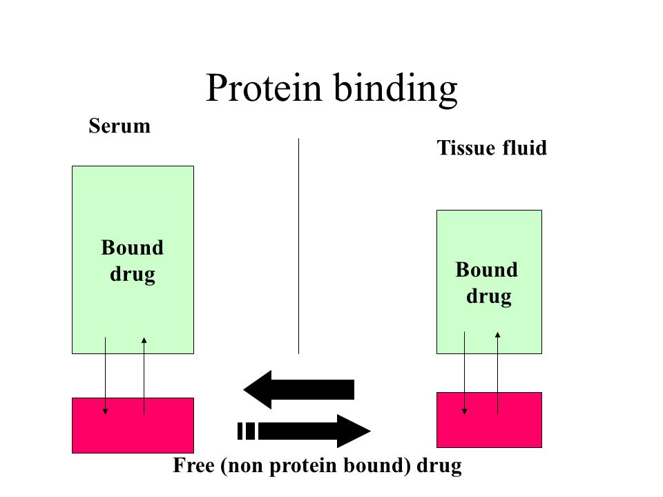 Protein binding Serum Tissue fluid Bound drug Bound drug