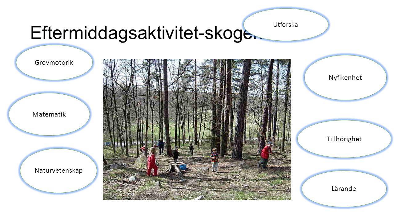 Eftermiddagsaktivitet-skogen