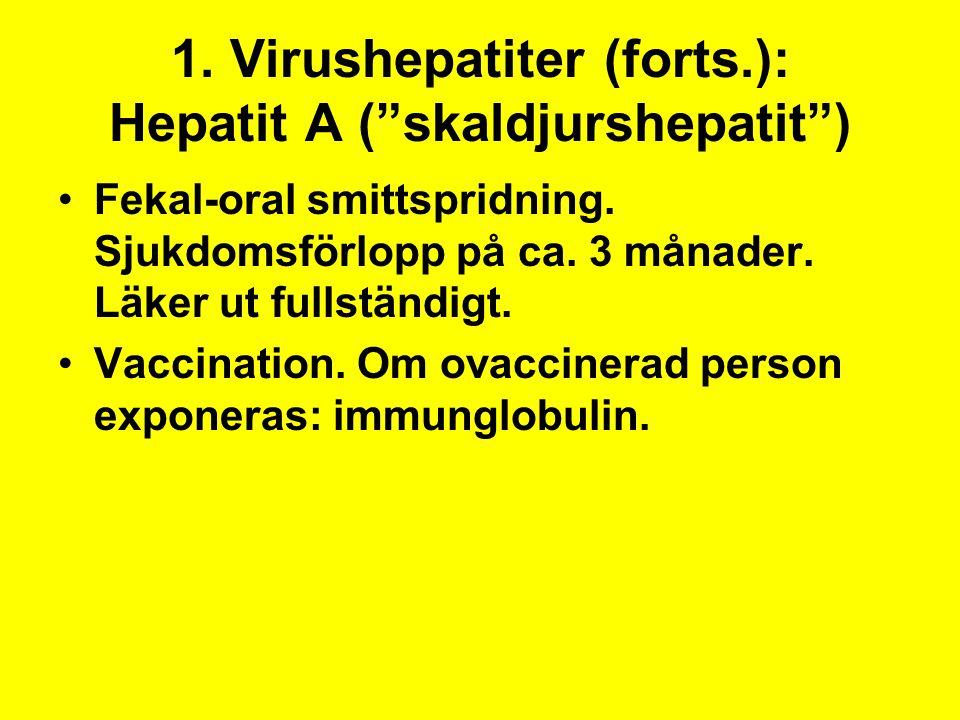 1. Virushepatiter (forts.): Hepatit A ( skaldjurshepatit )