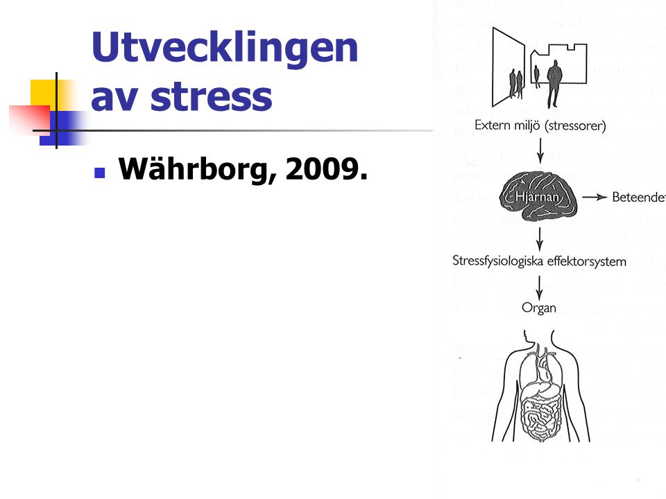 Utvecklingen av stress