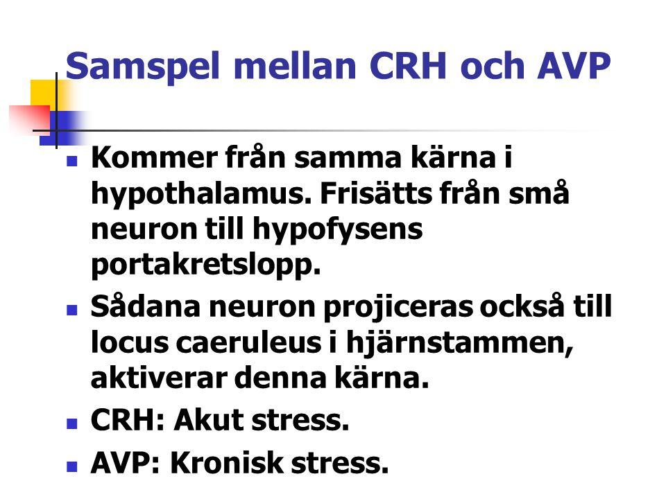 Samspel mellan CRH och AVP
