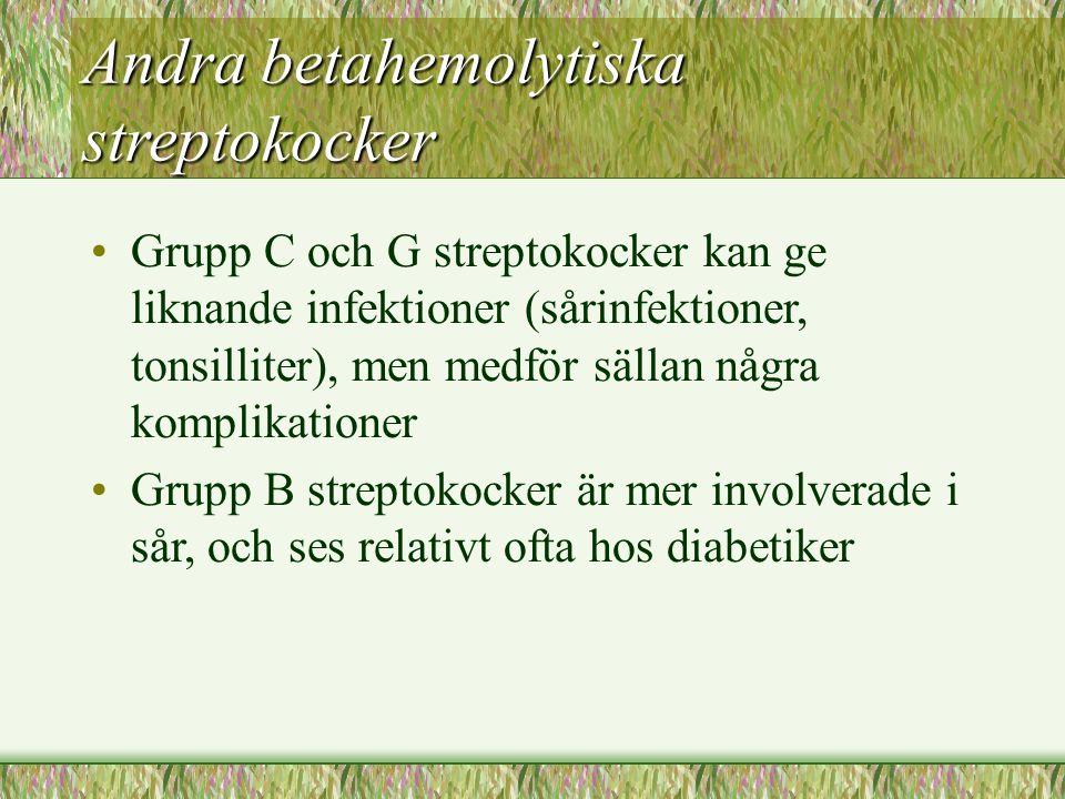 Andra betahemolytiska streptokocker