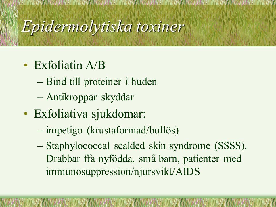 Epidermolytiska toxiner