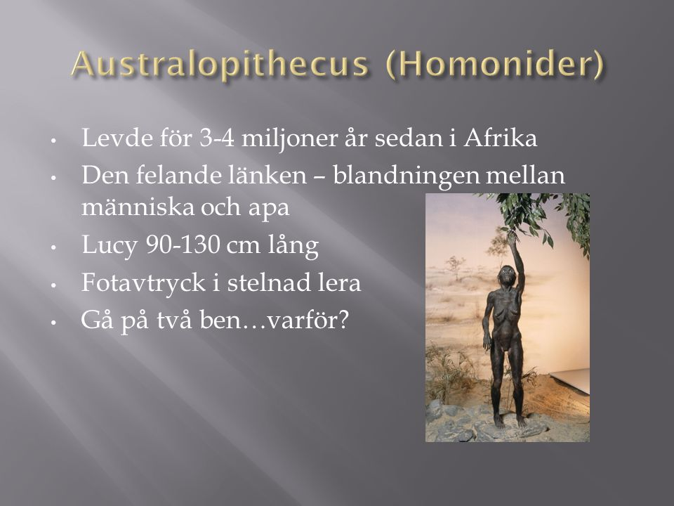 Australopithecus (Homonider)
