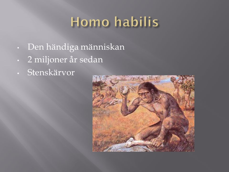 Homo habilis Den händiga människan 2 miljoner år sedan Stenskärvor