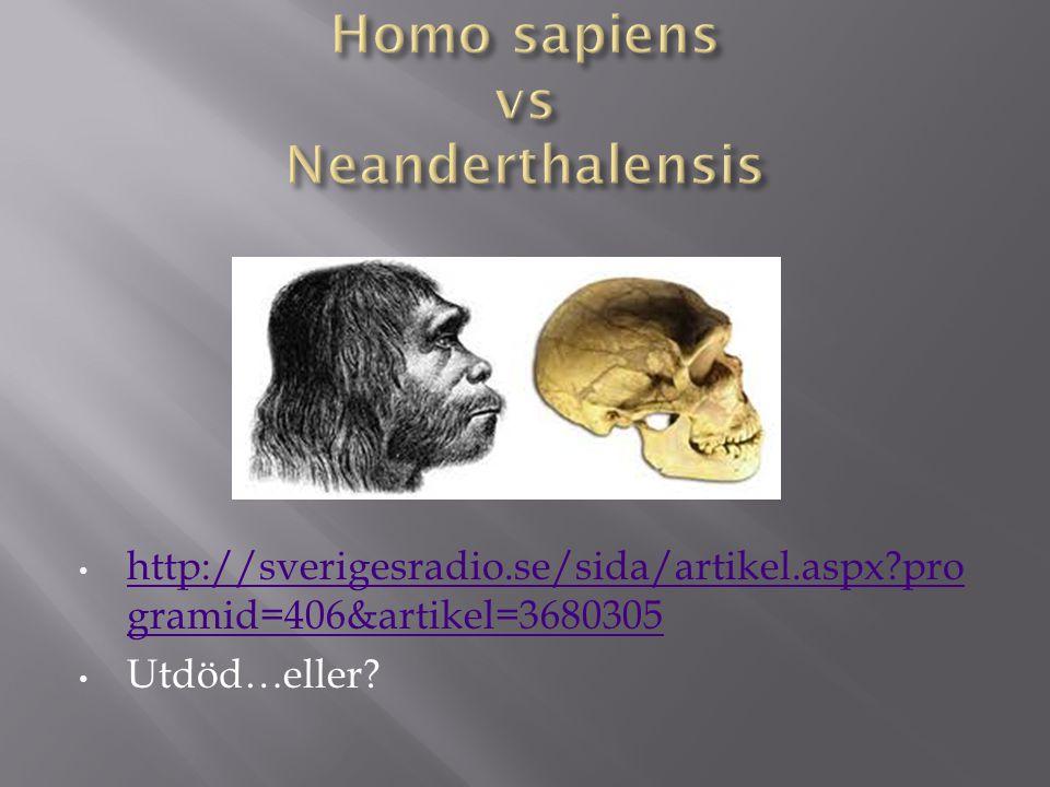 Homo sapiens vs Neanderthalensis