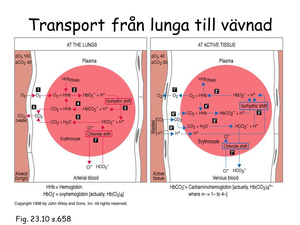 Transport från lunga till vävnad