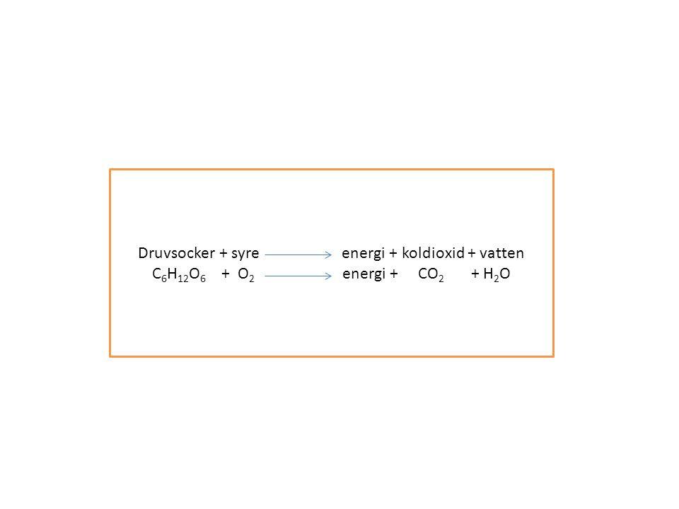 Druvsocker + syre energi + koldioxid + vatten