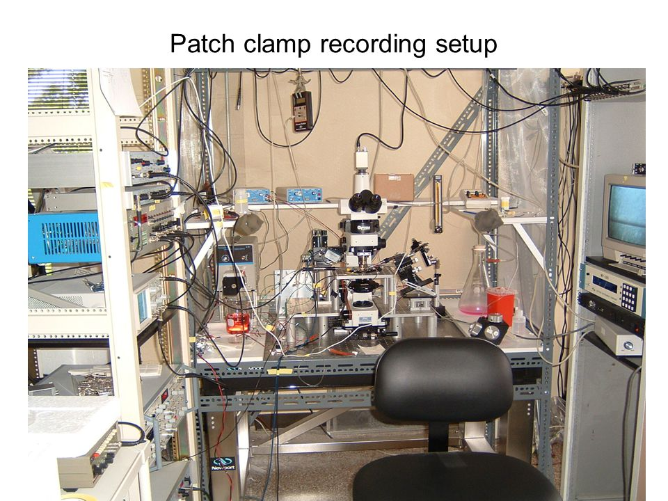 Patch clamp recording setup