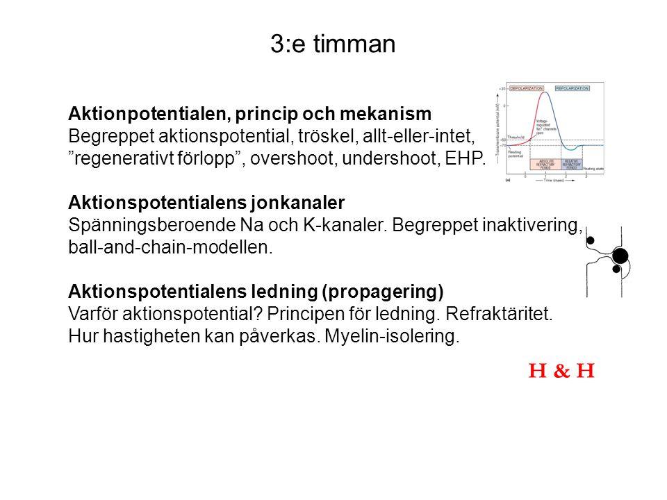3:e timman H & H Aktionpotentialen, princip och mekanism