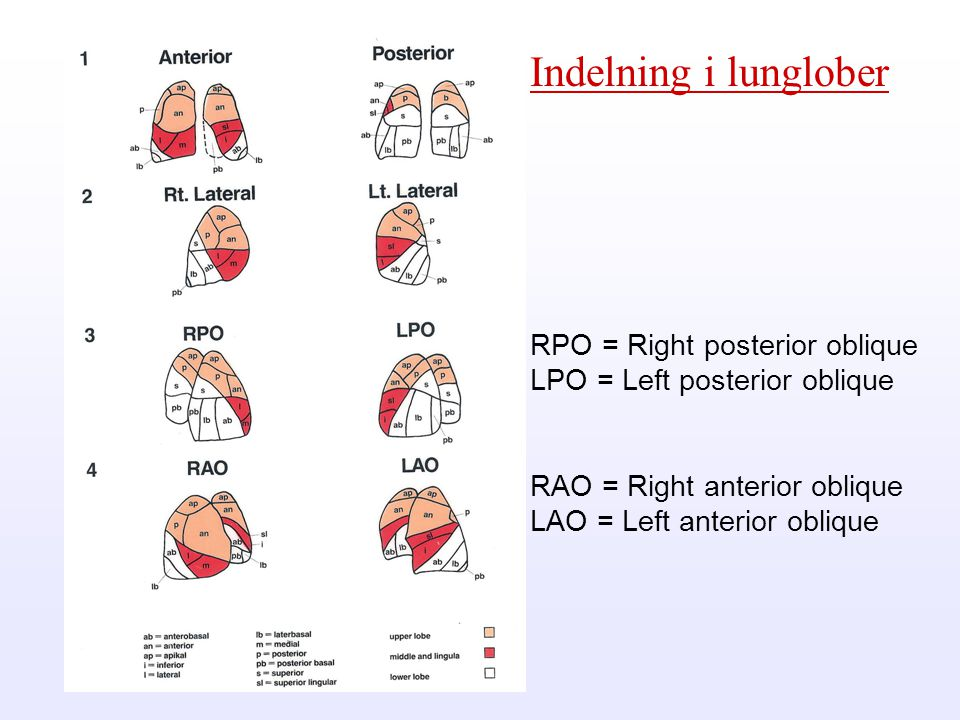 Indelning i lunglober RPO = Right posterior oblique