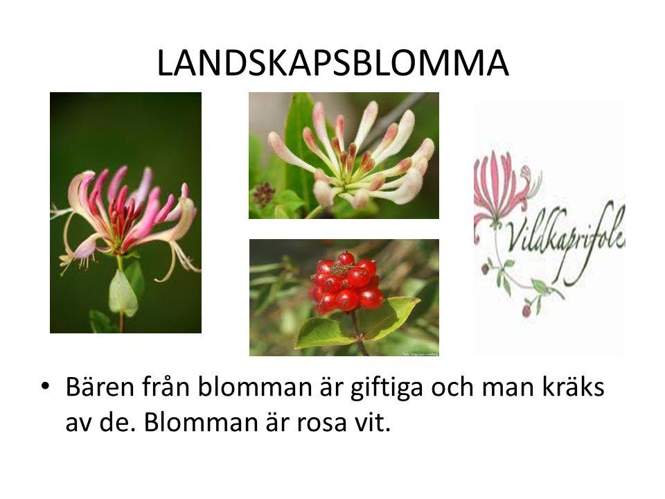 LANDSKAPSBLOMMA Bären från blomman är giftiga och man kräks av de. Blomman är rosa vit.