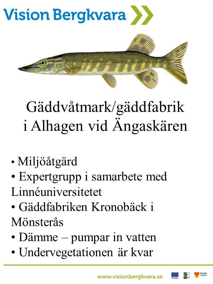 Gäddvåtmark/gäddfabrik i Alhagen vid Ängaskären