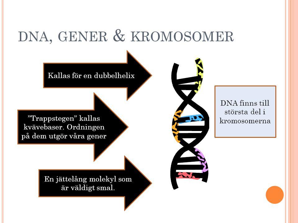 dna, gener & kromosomer Kallas för en dubbelhelix